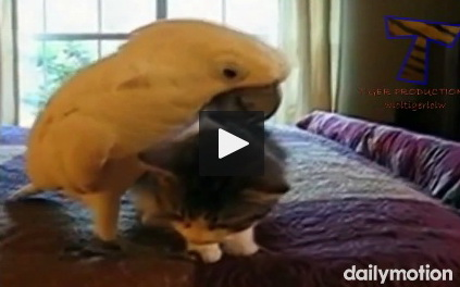 cats-and-dogs-vs-parrots-