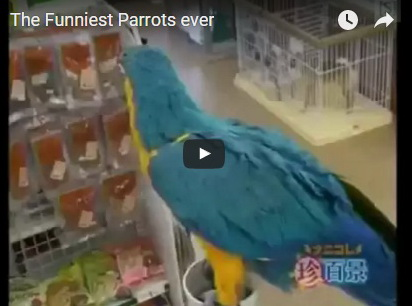 funniest-parrots-ever-